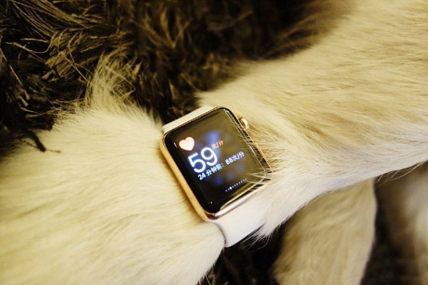 "Pic shows: The Husky wearing the Apple Watch. The son of China's richest man has been flaunting his riches on social media once again, this time buying new Apple products for his pet Husky to wear. Wang Sicong, the 27-year-old son of China's richest man, gave his dog, known as Wang Keke, two Apple Watches to wear on each of her front legs while at their residence in China's metropolis Shanghai. Sicong, who even used the watches to test Keke's heart rate, wrote in the photos: ""Hehe more new watches. I wanted to wear four watches – one on each leg – but later thought that it was too much boasting, so two will do. Two is the minimum, though, otherwise it would be unbefitting of my status. One question comes to mind: Do you have one?"" The photos were posted on a Weibo account created by his staff specifically for the Husky. Sicong is the only son of 60-year-old Wang Jianlin, China's richest man and CEO of Dalian Wanda Group Corporation Limited – a Chinese conglomerate that is the country's largest private property developer. The young man has frequently come under fire in China with state news agency Xinhua saying Wang ""recklessly disseminates vulgar information … from the worship of money to sex and violence"". When Wang republished Xinhua's attacks on his highly popular Weibo social media account, he won online support, with many arguing that Xinhua had overreacted to lighthearted comments. However, the news agency has refused to back down, expanding its attack on Wang as a decadent elitist. The row comes amid a crackdown on sexually suggestive material by Chinese authorities. (ends)"