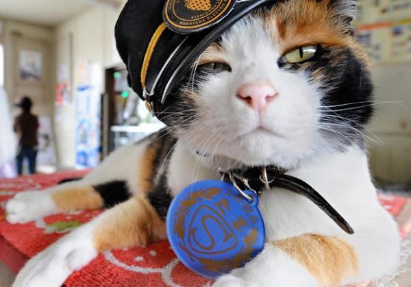 Фото: в Японии прошли похороны кошки-станционного смотрителя