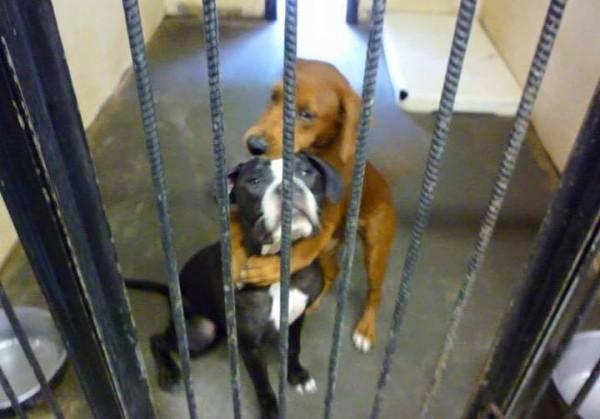 Фотография двух обнимающихся собак помогла спасти их от усыпления
