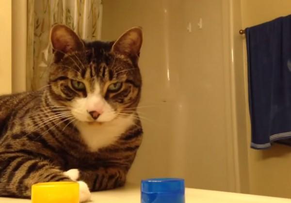 Этот кота не провести. Хозяйка сыграла с питомцем в игру «угадай где»