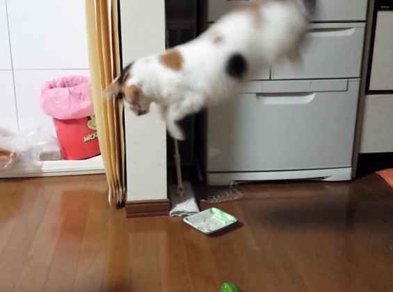 Смотреть приколы испуг кота от огурцов