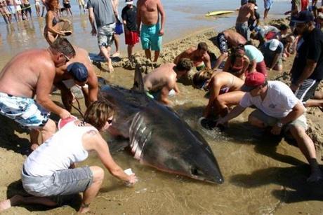 Shark9-606