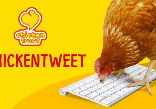Аккаунт живого цыпленка набирает популярность в Твиттере