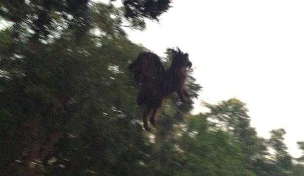 В Нью-Джерси молодой человек сфотографировал существо, крайне напоминающее дьявола