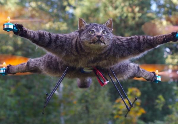 Летающие корова, мышь и кот. 5 спорных дронов от голландского художника. Фото и видео