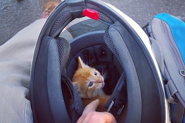 «Звучит глупо, но я спасла котенка». Мимими видео с девушкой-байкером