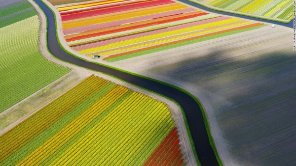 151013162248-dronestagram-tulip-field-super-169
