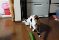 Кошки боятся огурцов? Как правильно пугать кота и стоит ли это делать