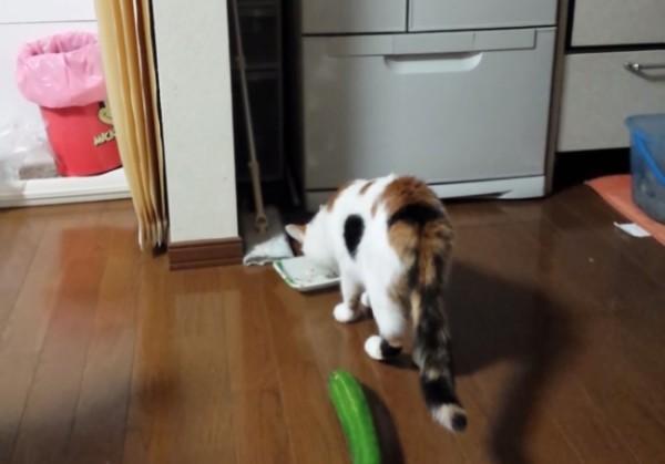 Видео пугать кота