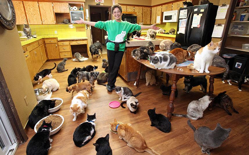 Картинки много кошек в доме