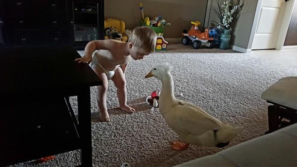 duck 04