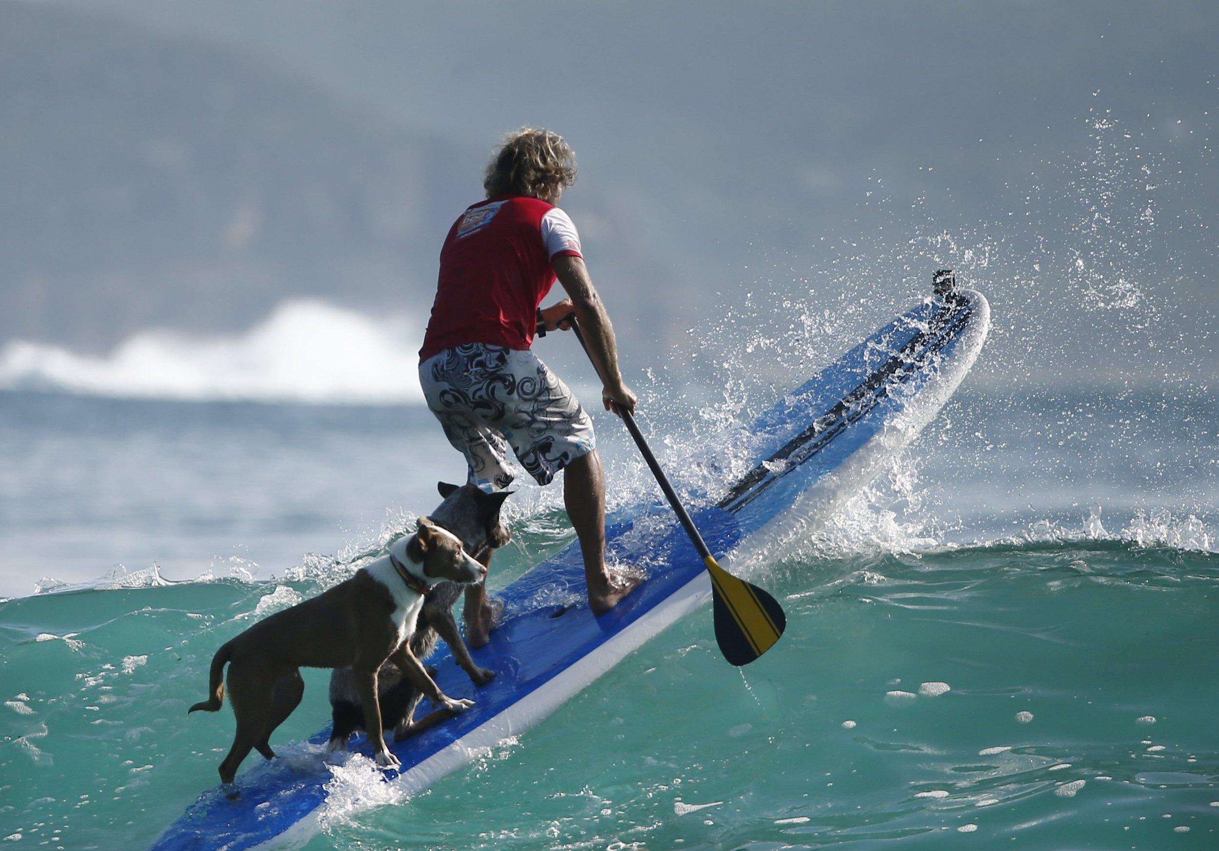 Серфинг смешные картинки