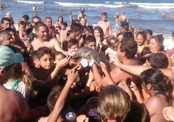 В Аргентине толпа туристов погубила детёныша дельфина ради селфи