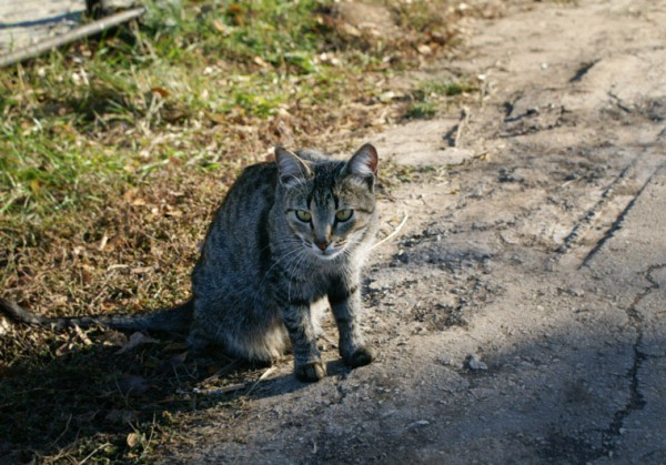 В Москве ищут кота, обвязанного взрывчаткой
