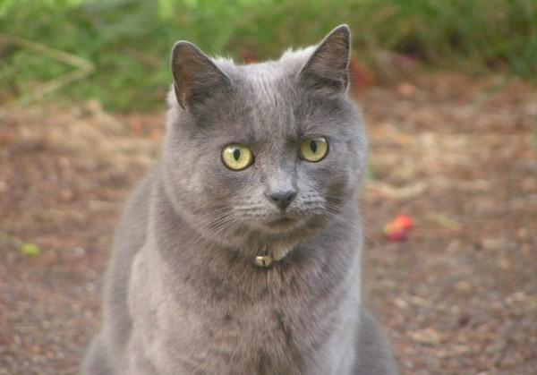 Трое рязанцев взорвали кота петардой, но избегут наказания за это