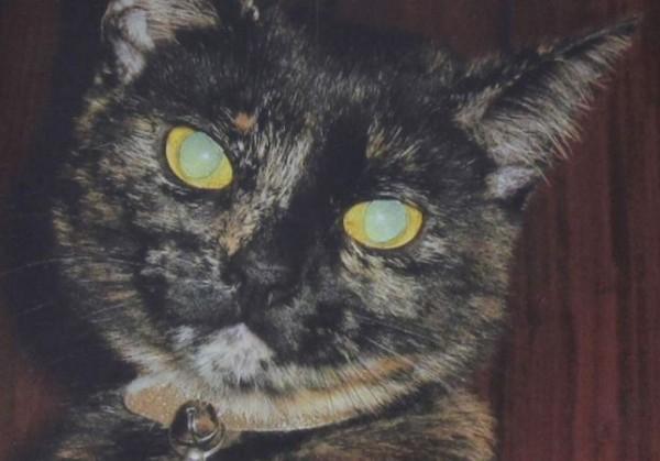 «Головы не было, хвоста тоже». В Лондоне ищут «потрошителя кошек»