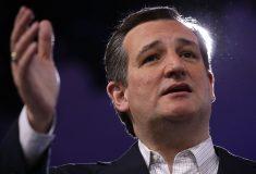 Женская версия Теда Круза. Фото копии американского политика стало вирусным