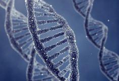 Учёные заявили об открытии генов «возраста первого секса»