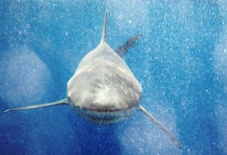 Кровавую трапезу десятков акул очевидцы сняли при помощи дрона