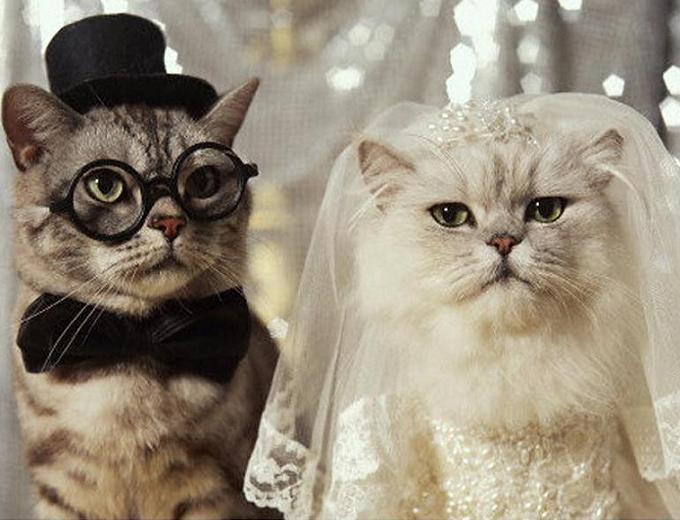 Поздравления жениха и невесты на свадьбе от брата нашому фото-каталозі
