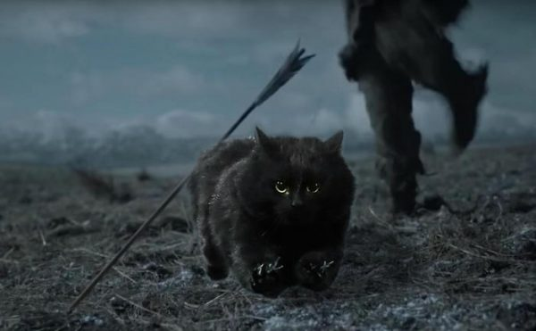 кот бастард