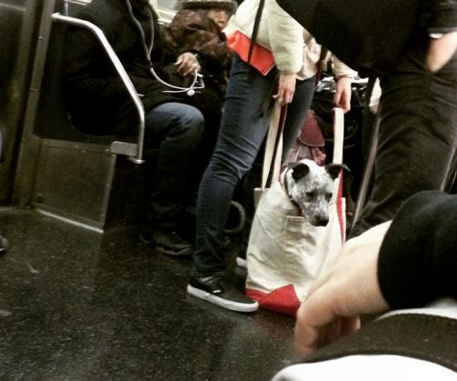 man-with-giant-dog-tote-bag-new-york-subway-3