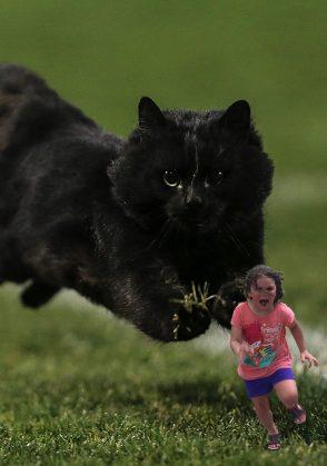 убегай от кота