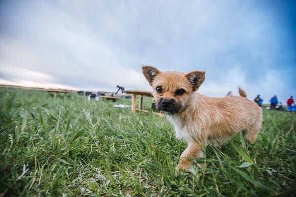 Она выбрала меня». Бездомная собака пробежала с марафонцем 100 километров по пустыне Гоби