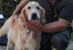 10 дней под завалами. В Италии после землетрясения спасли ретривера Ромео