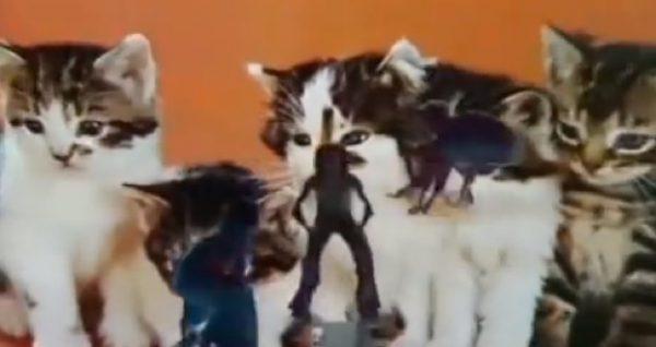ballet-zoom-cats-2