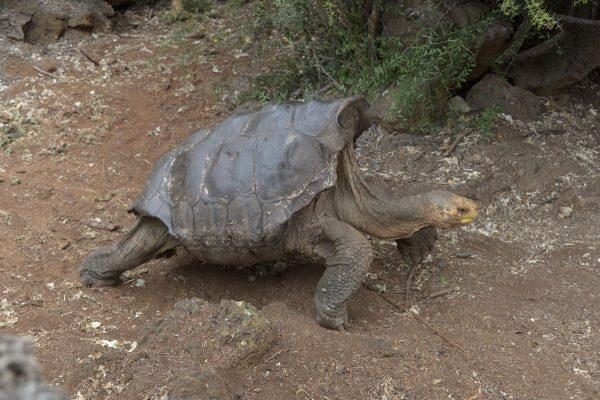 Секс у морских черепах видео
