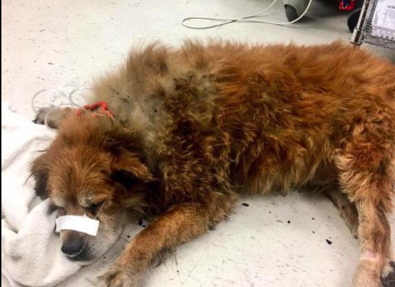 В США собака защищала хозяйку от огня до приезда пожарных и спасла ей жизнь