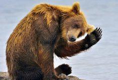 Кандидат в вице-президенты от республиканцев выдумал «русскую» пословицу про медведя