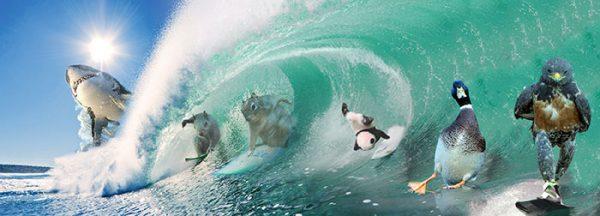 funny-hawk-photoshop-battle-10-57f1fd5acc09f__700