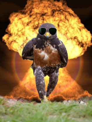 funny-hawk-photoshop-battle-14-57f1fd63c7ed8__700