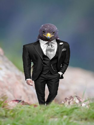 funny-hawk-photoshop-battle-24-57f1fd7a599ab__700