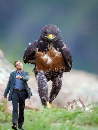 funny-hawk-photoshop-battle-29-57f1fd840b6cc__700