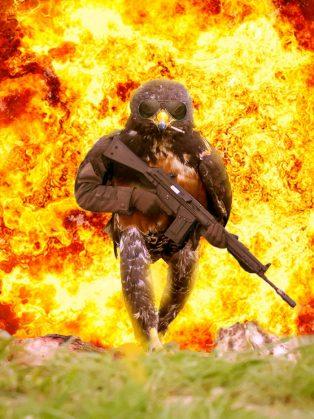 funny-hawk-photoshop-battle-3-57f1fd4c7dad9__700