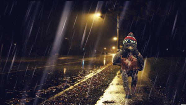 funny-hawk-photoshop-battle-32-57f1fd8b886f9__700