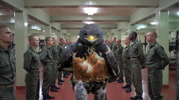 funny-hawk-photoshop-battle-9-57f1fd58c76d3__700