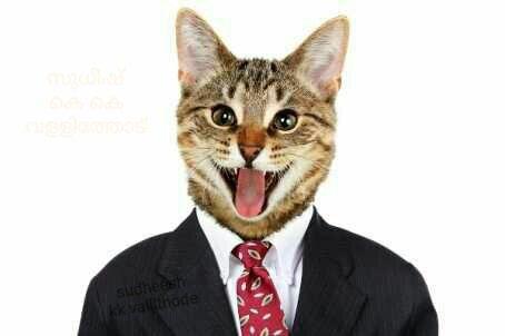 kitty 01