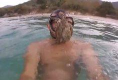 Как кадр из «Чужого». Парень поплавал с осьминогом, который не хотел его отпускать