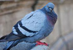 «В булочную — ни ногой». Работник хлебозавода снял на видео, как голуби играют «в аквапарк»