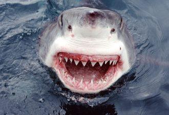 «А ну пошла!» Рыбак отбился от акулы с помощью швабры