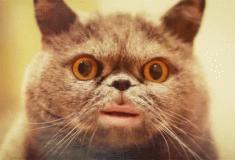 «Wayo!» Кот спел дуэтом с хозяином хит 90-х