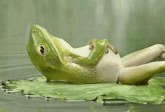 Зимние реагенты заставляют лягушек менять пол