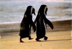 «Отпусти её». В соцсетях сочувствуют отвергнутому и побитому пингвину