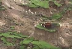 #СпаситеКоров. В твиттере переживают за животных, пострадавших от землетрясения в Новой Зеландии