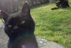 «Пропахший смертью и капустой». Британец насчитал у своего кота как минимум 15 жизней