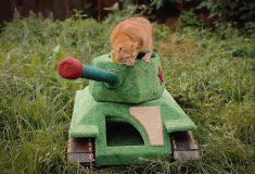 Автор «кошачьего танка» прославился на весь мир после репортажа BBC
